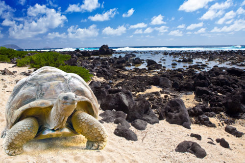 the turtle at Galapagos islands