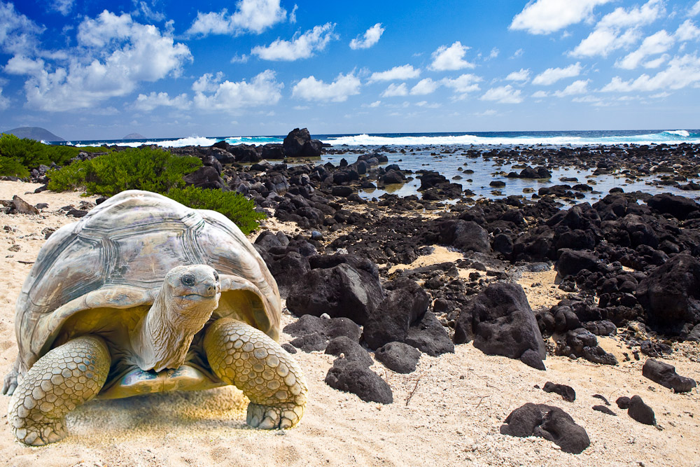 Galapagos Islands A Quot Missing Quot Place On Earth Gets Ready