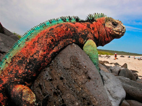 Galapagos islands for the animal lovers