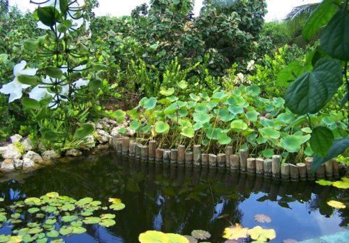 Floral Garden lake