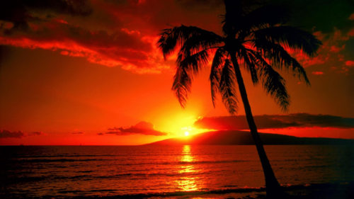 beautiful sunset in hawaii