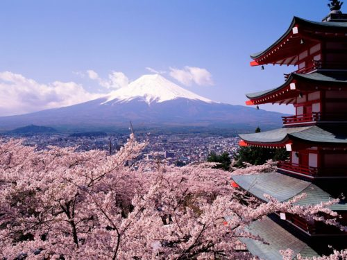 kyoto-sakura-flower