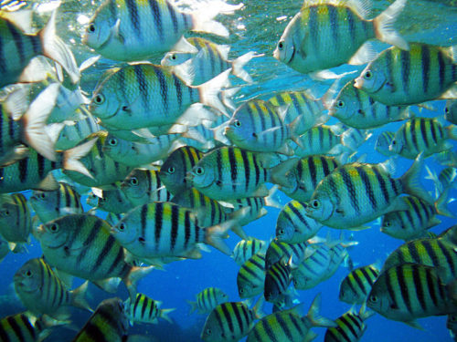 phuket fish