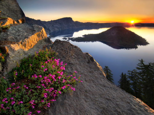 CXPN2F Sunrise and penstemon. Crater Lake National Park, Oregon mountain wildflowers
