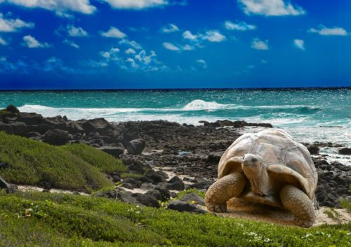 Galapagos islands animal