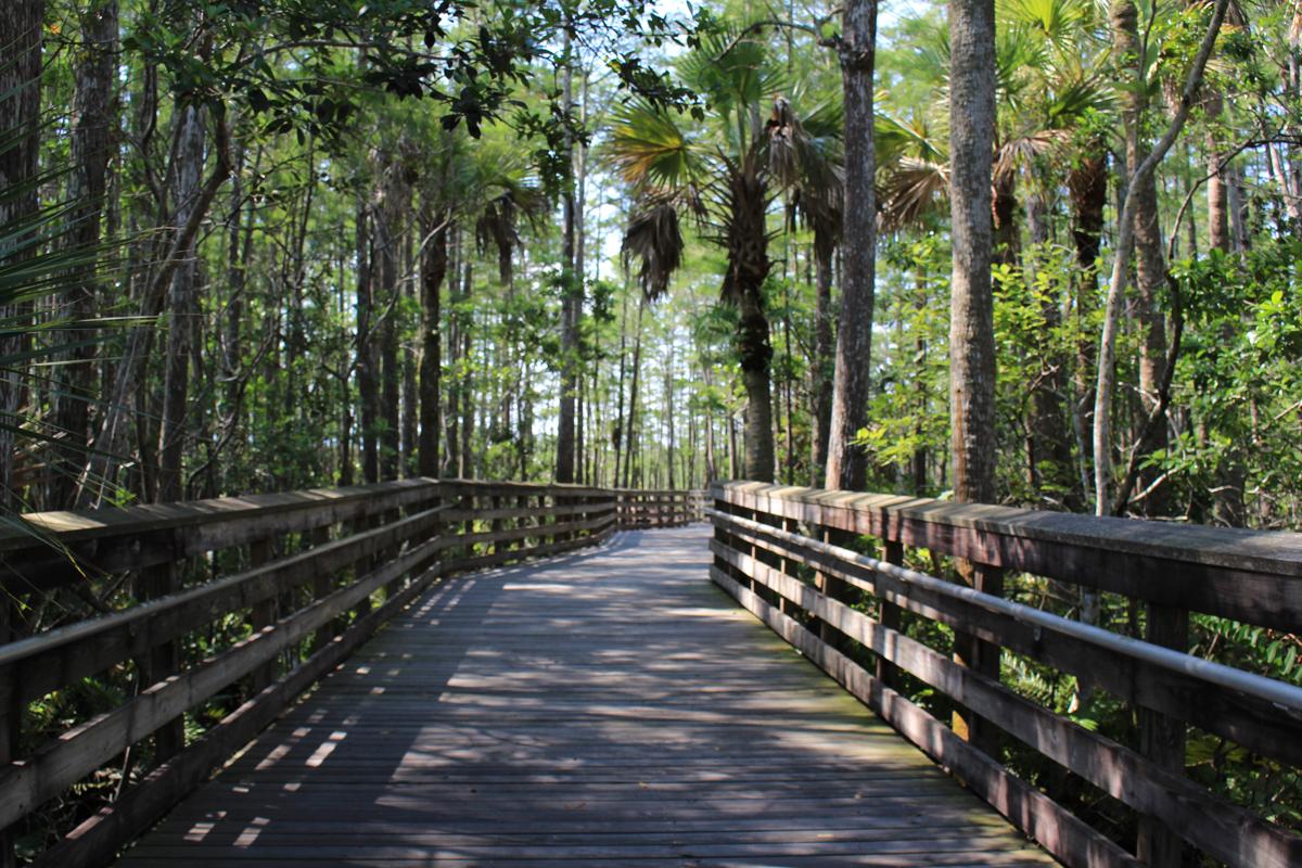 Wetlands Park Nature Preserve